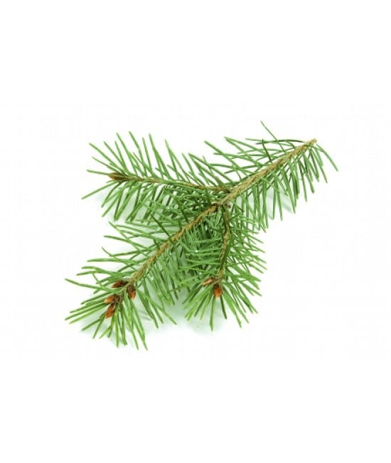 Fir Needle Oil Chinese whitespace