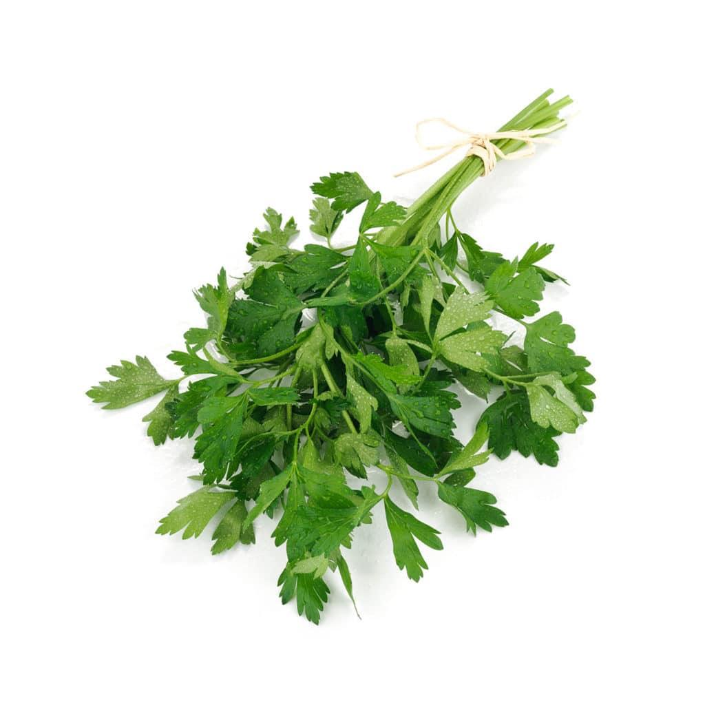 Parsley Herb Oil whitespace