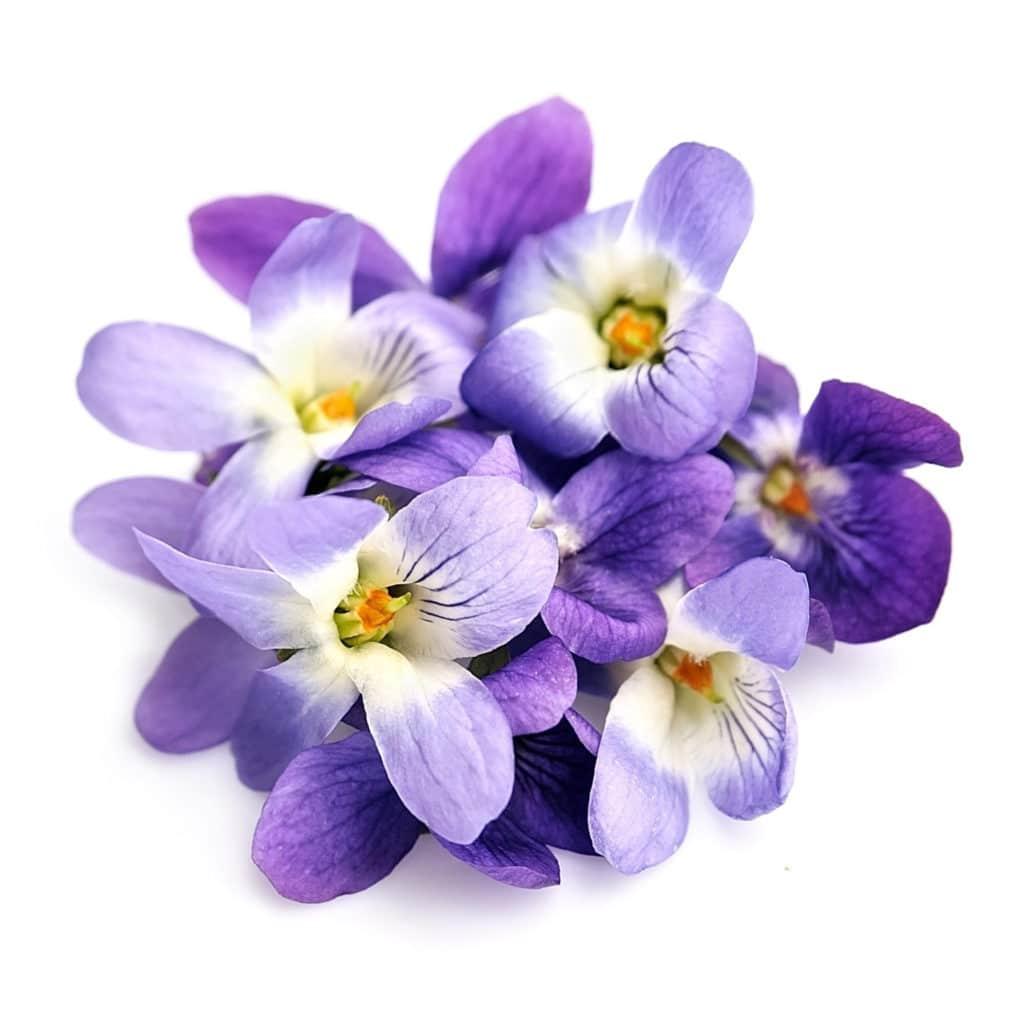 Violet Leaf Absolute whitespace