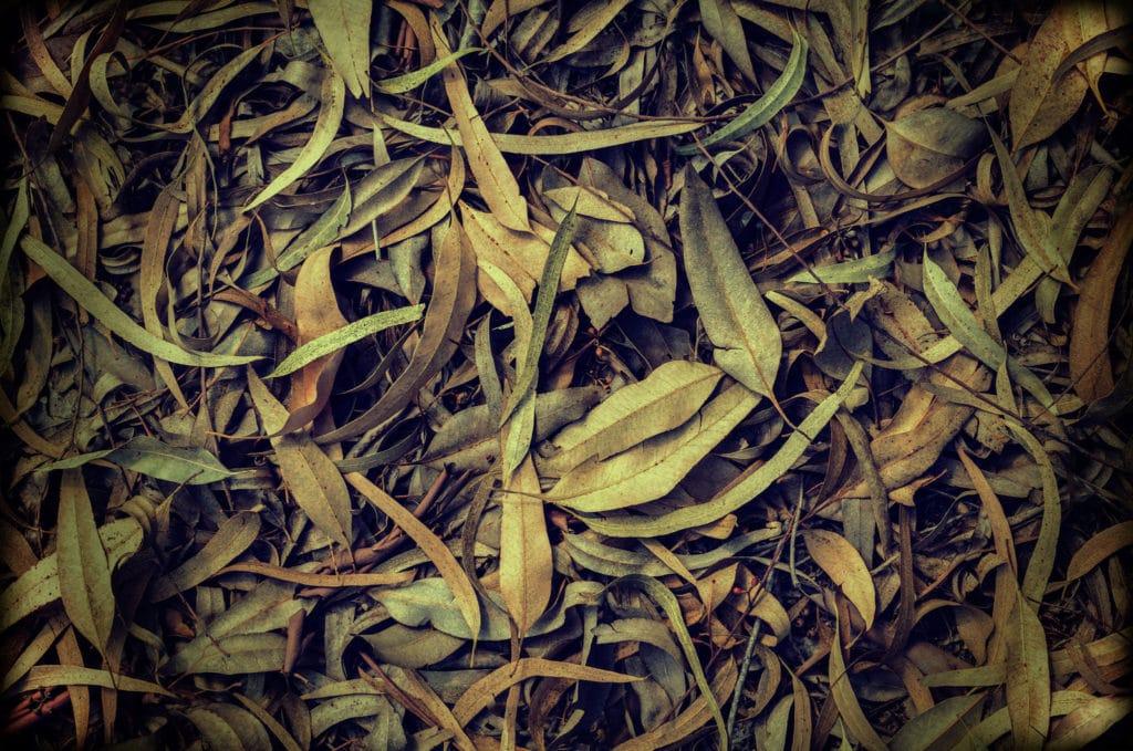 eucalyptusoileucalyptol