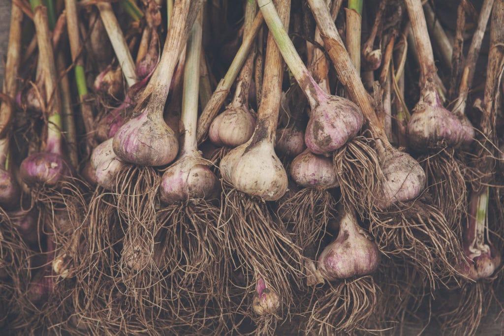 Garlic Oil Chinese