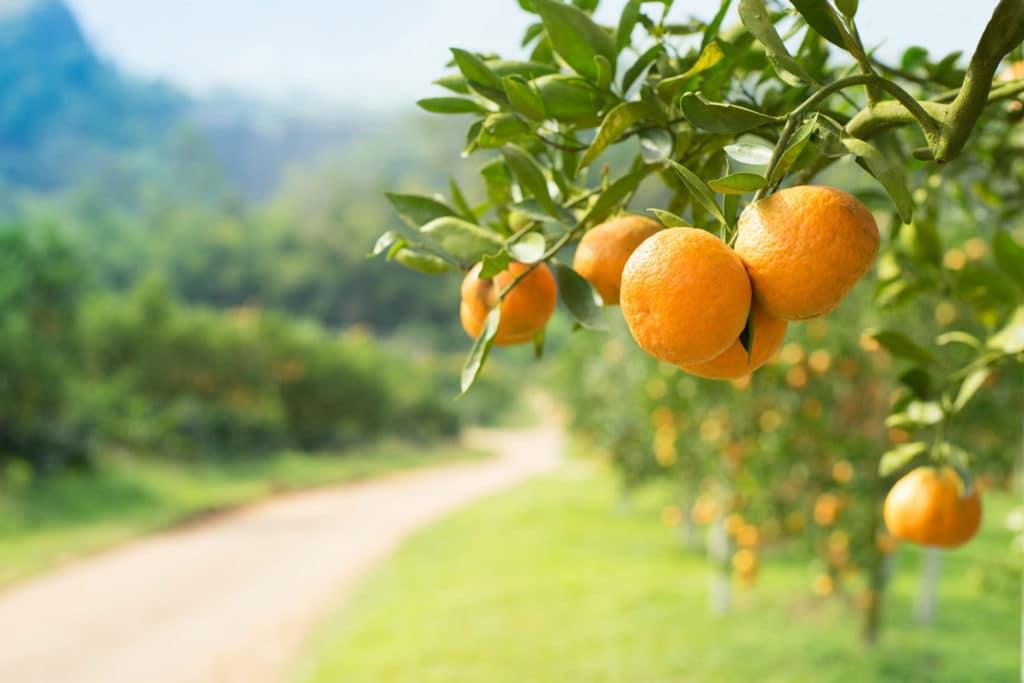 orangeoilderivatives