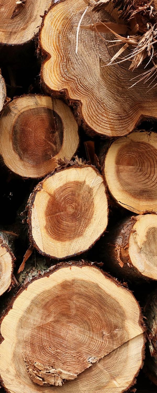 cedarwoodoilsamerican