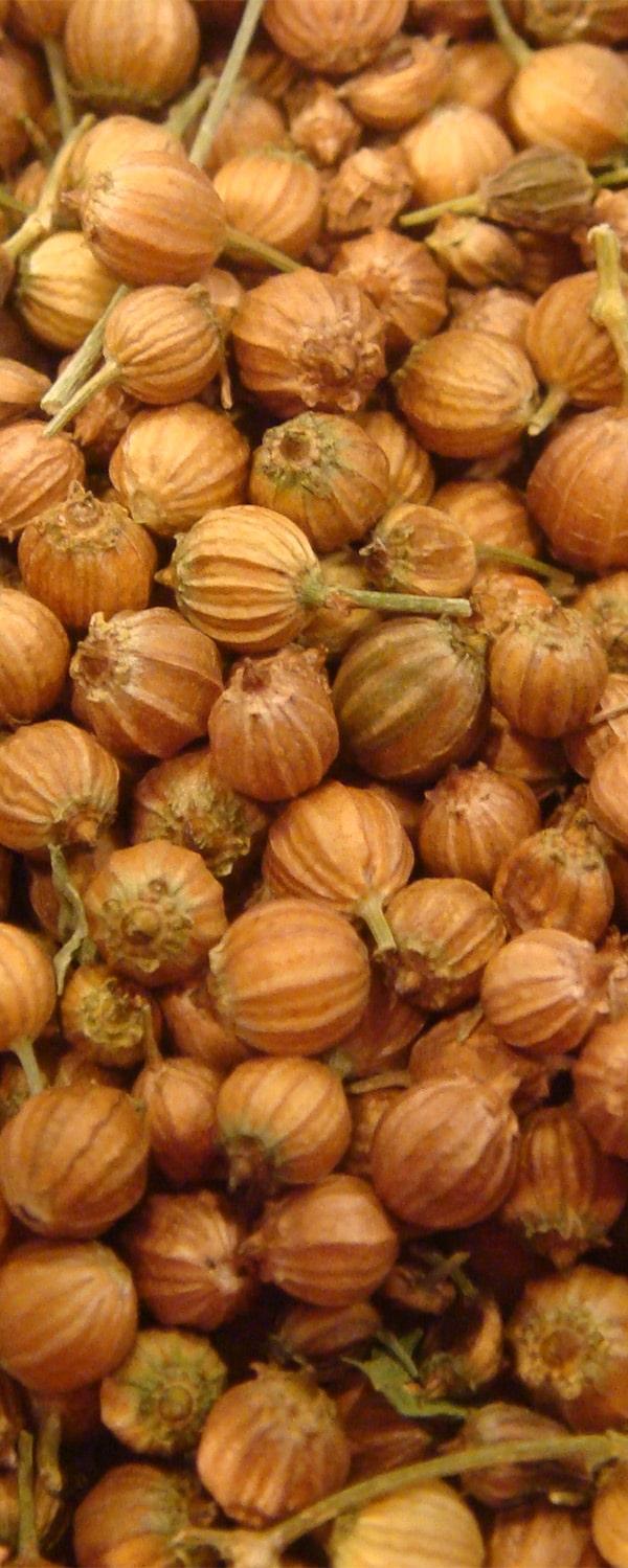 corianderseedoil
