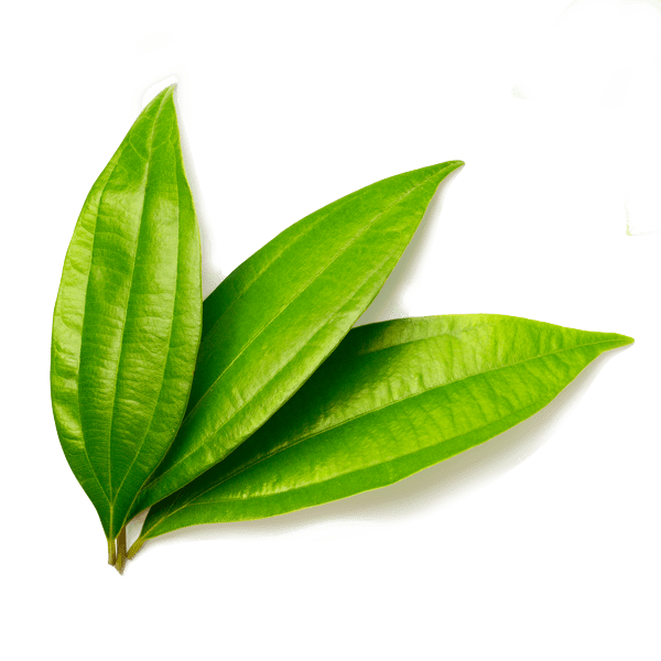 Cinnamon Leaf Oil Ceylon whitespace