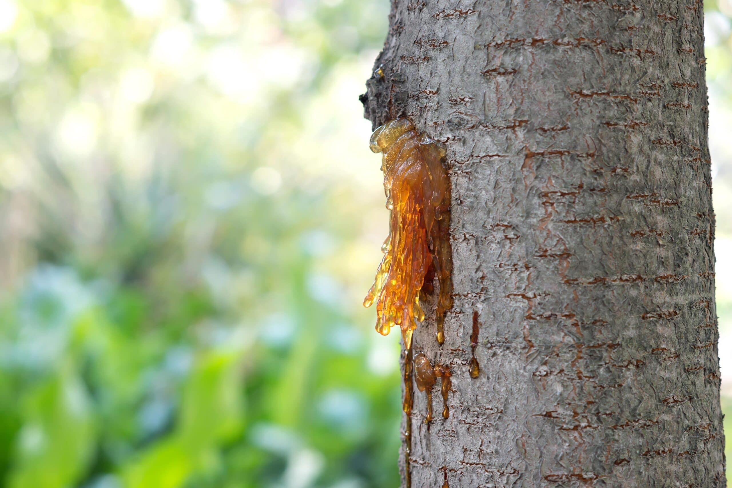 Birch Tar Rectified