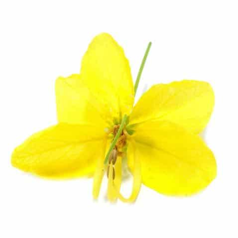 Cassia Oil Organic whitespace