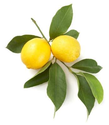 Lemon Oil Italian whitespace
