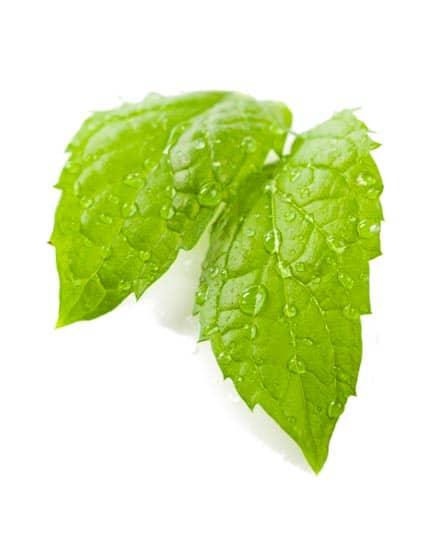 Peppermint Oil Organic whitespace