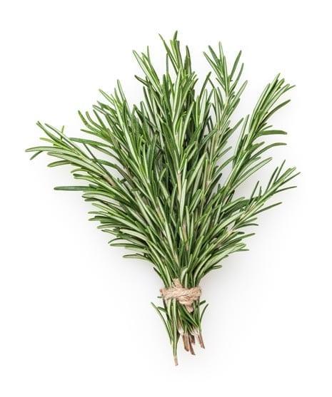 Rosemary Oil Organic whitespace