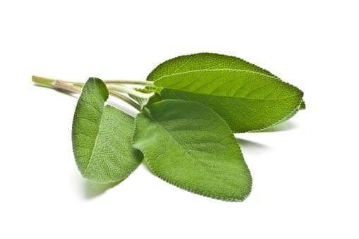 Sage Oil Organic whitespace