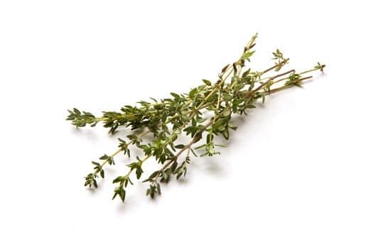Thyme Oil Organic whitespace