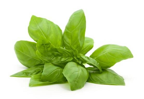 Basil Oil Linalool Type whitespace