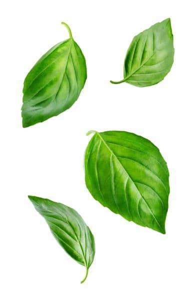 Basil Oil Organic whitespace