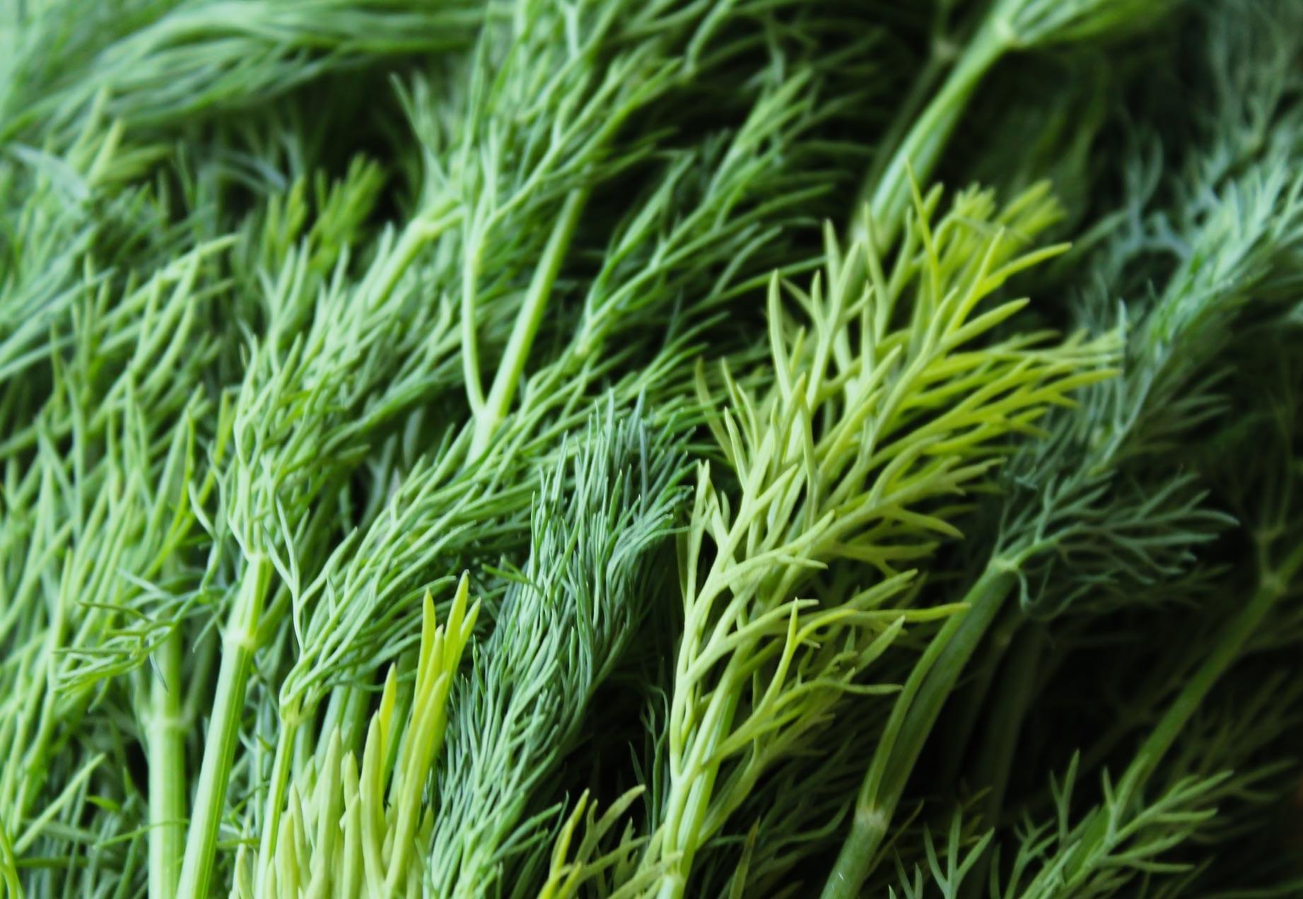 Dillweed Oil Organic