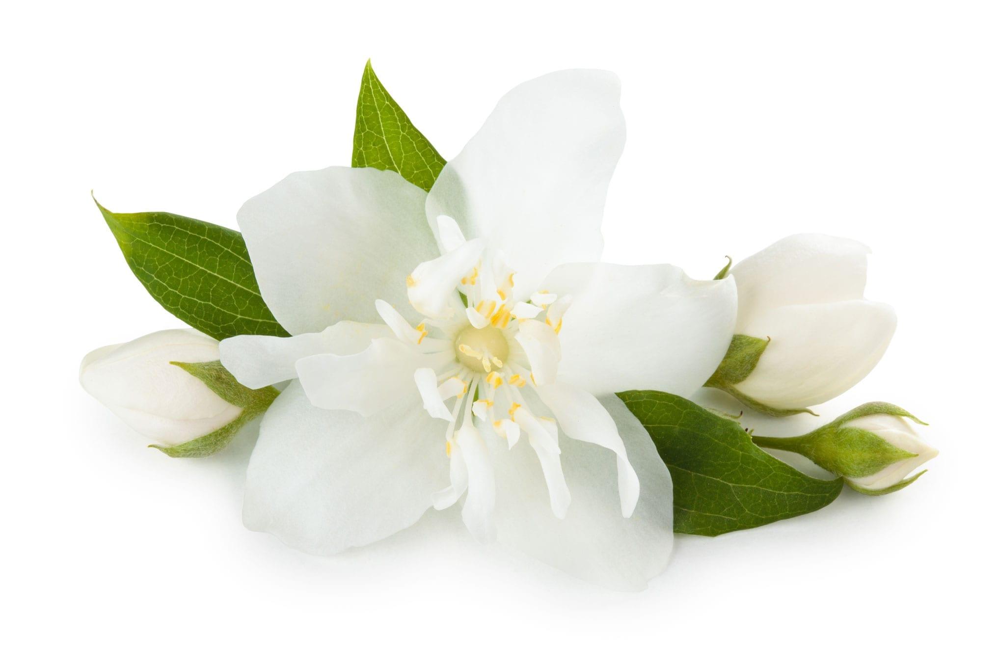 Jasmine Absolute whitespace