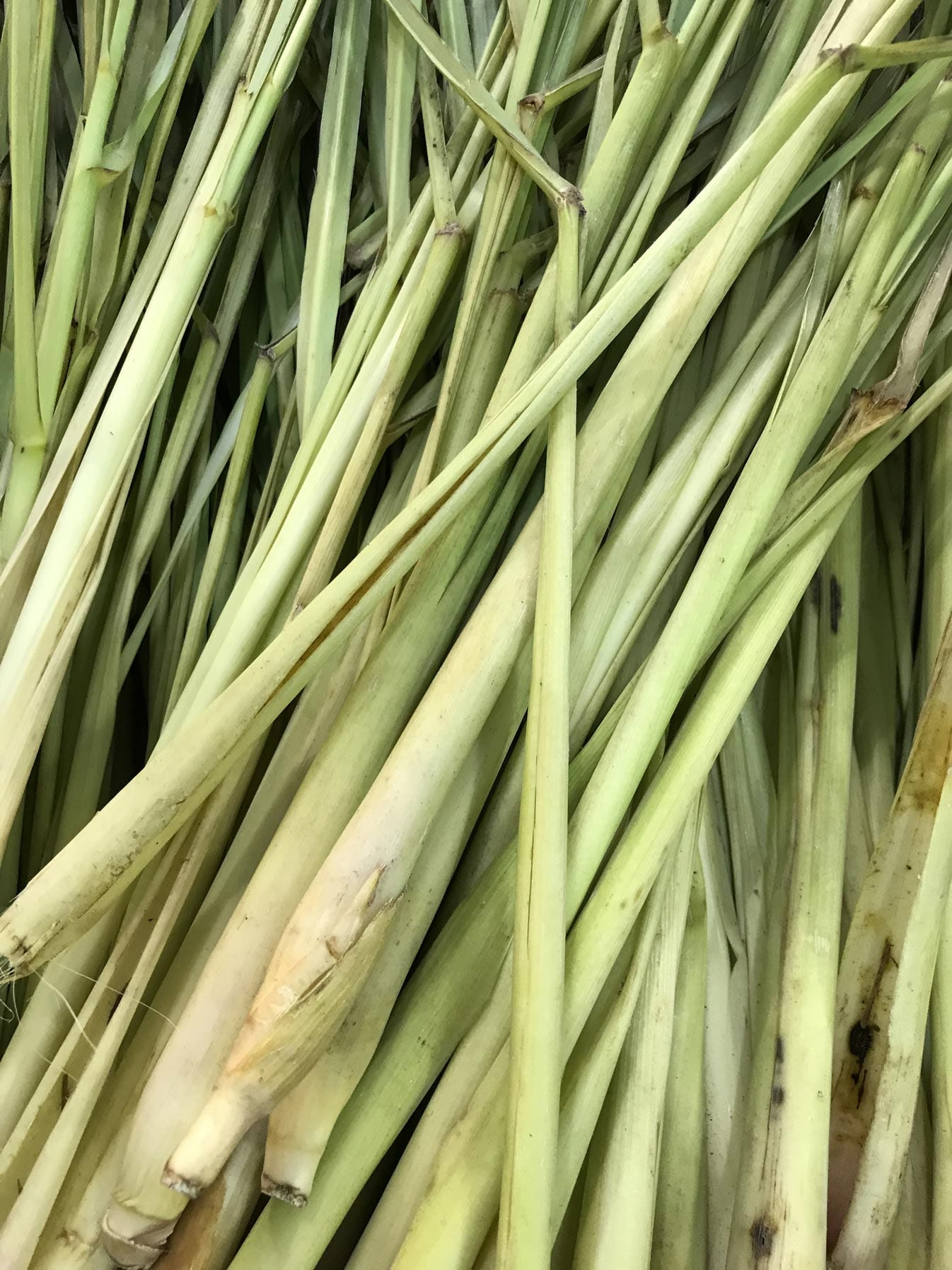 Lemongrass Oil Organic