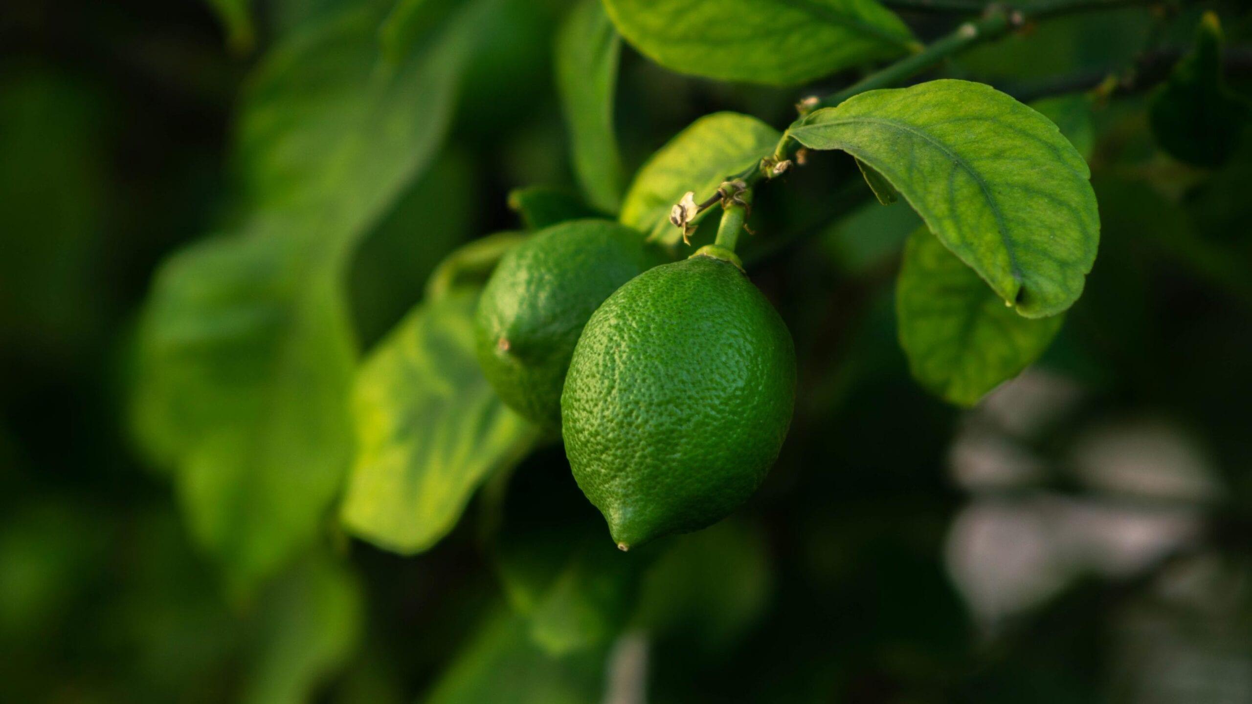 Lime Oil Distilled Peru