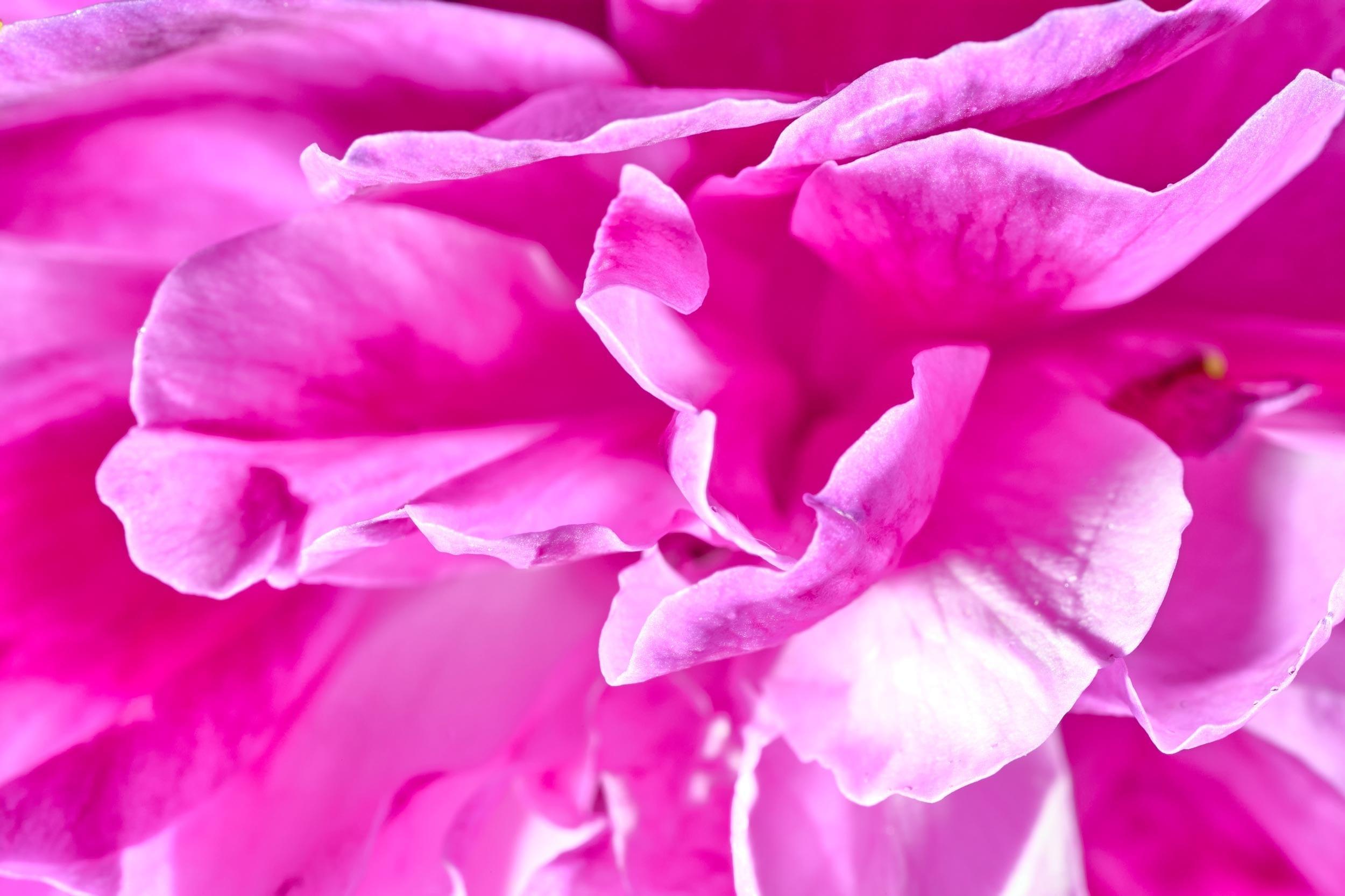 Rose Concrete Bulgarian