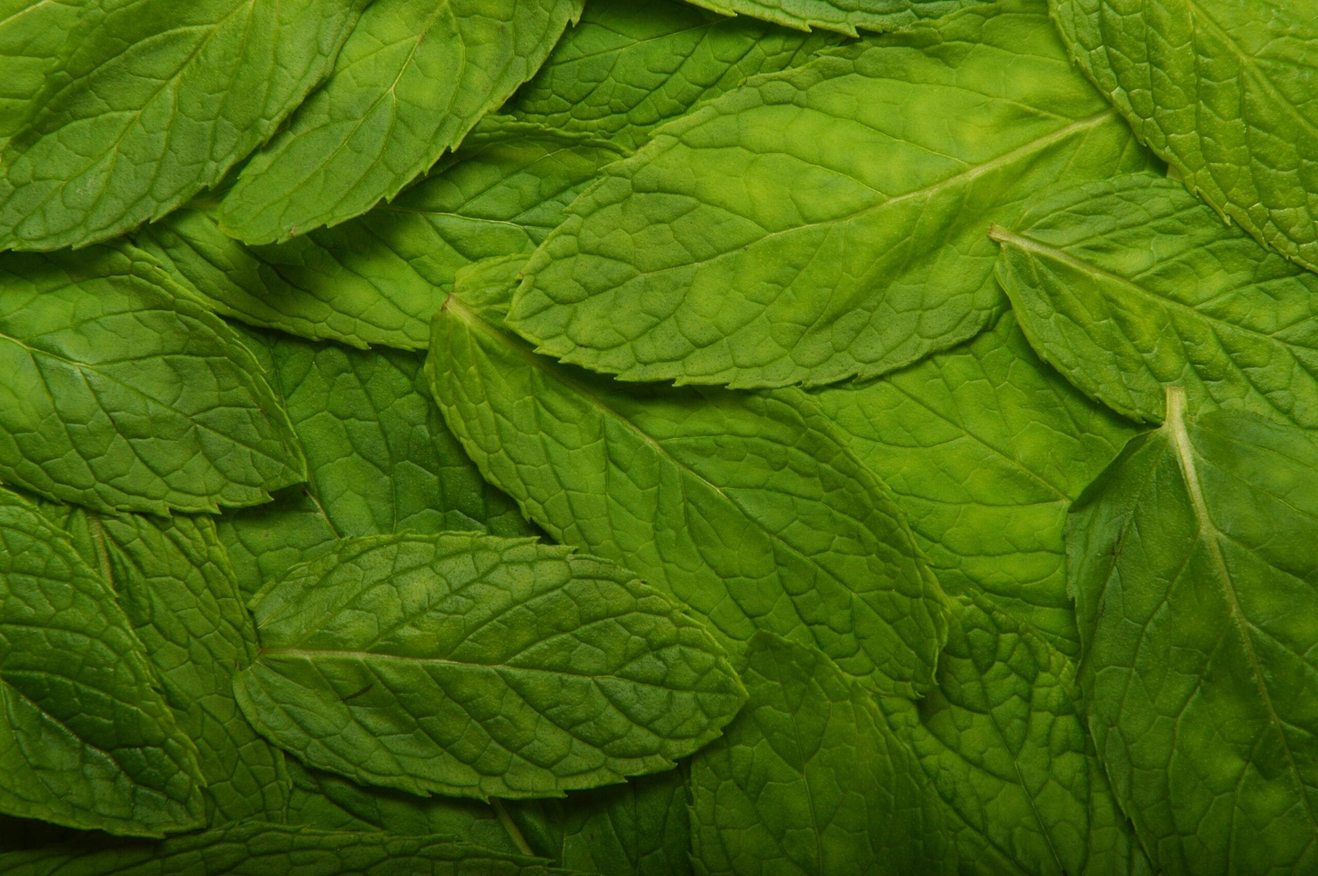 Spearmint Oil Chinese 80%
